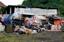 A dog in garbage collector's yard on Winanga riverbank